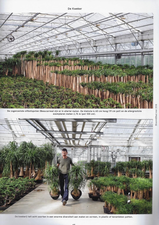 artikel bloem & blad 3 me t afbeelding Norbi (Groot)