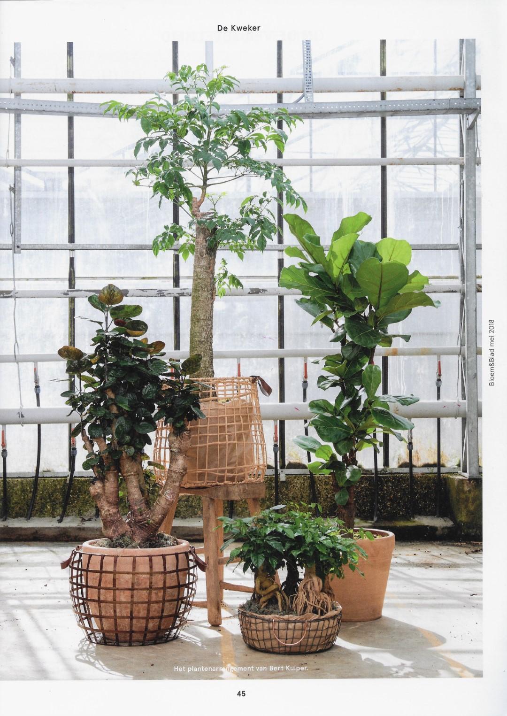 artikel bloem & blad 5 arrangement met div. foto's (Groot)